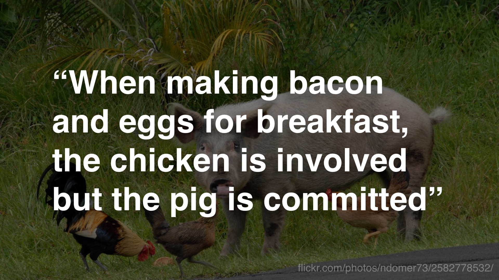 """When making bacon and eggs for breakfast, the chicken is involved but the pig is committed"""